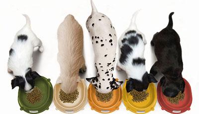 best 5, бест 5, куче, кучета, породи, големи кучета, храна за кучета, храна за кученца, хранене на подрастващи кученца, храна за млади кучета, храна за големи кучета, храна за отраснали кучета, суха храна за кучета, храна за кучета цени, храни за кучета, гранули за подрастващи кучета, суха храна за кучета, дневна дажба на куче, качествена храна за кучета, най-добрите храни за кучета, качествена храна за кучета, петте най-качествени храни за кучета, полезни съвети за куче, Royal Canin, Роял Канин, Purina Pro Plan, Пурина Про План, Eukanuba, Еукануба, Хилс, Hill's, Lintbells, Линтбелс, хранителна добавка за стави за кучета, зеленоуста мида