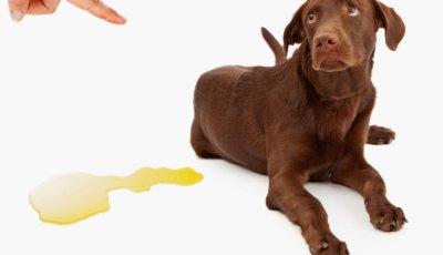 Ролята на  храната при превенция и лечение на камъните в пикочния мехур при кучетата