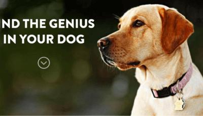 Открийте гения в своето куче