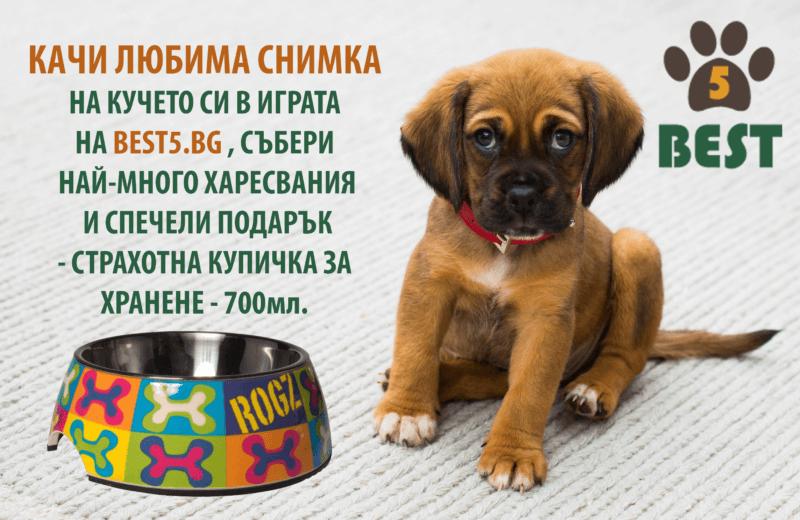 kachi-snimka-na-liubimoto-si-kuche-i-specheli-podarak-ot-best5_2